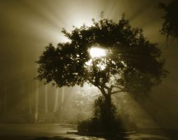 lights in the fog by NatalieKelsey
