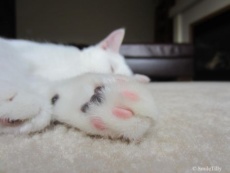 Pink paws by SmileTilly