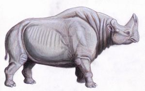 Embolotherium 'ergilense' by DiBgd