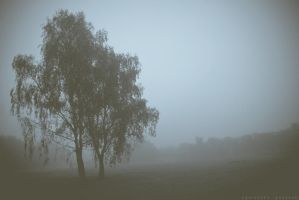 Tree in the Mist by wariatka