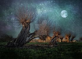 Willow trees  night  moon Stock by AStoKo by AStoKo