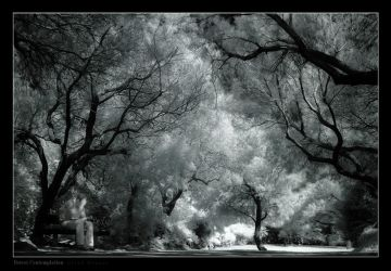 Forest Contemplation by gilad