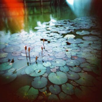 Lily Pond by: Ethermoon by toy-camera