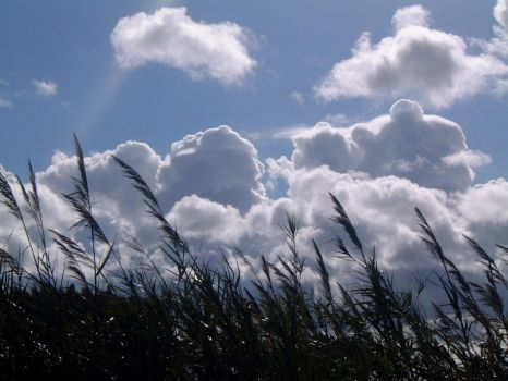 canes and clouds by anroco
