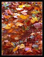 Autumn by Forestina-Fotos