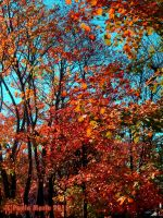 Autumn Trees For My Friends by youlittlemonkey