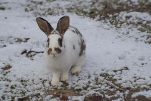 Schnee Hase 2 by DeathProof7891