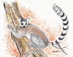 Ring-tailed lemur by Antresoll