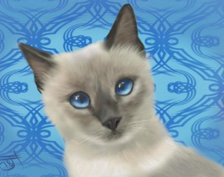 Siamese cat by enug66