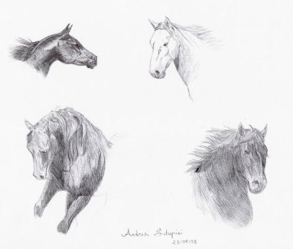 Horse heads sketch 2 by AndreaSchepisi