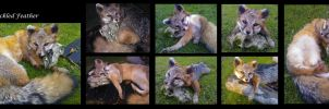 Gray Fox Soft Mount Taxidermy by Speckled-Feather-UK