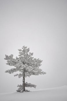 winter tree by draganea
