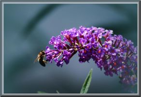 Butterfly Bush At Work by TThealer56