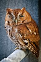 Not A Morning Owl II by JonShotFirst