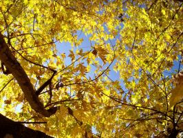 More Fall Leaves by Tailgun2009