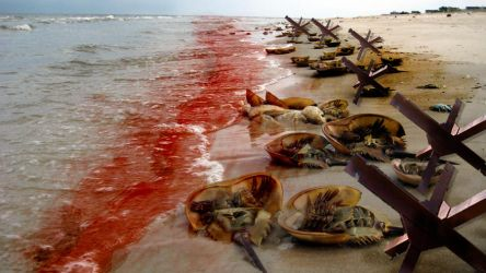 Saving Private Horseshoe Crab by HighPotency