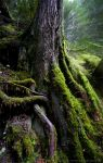 The Roots of Fangorn by JaclynTanemura