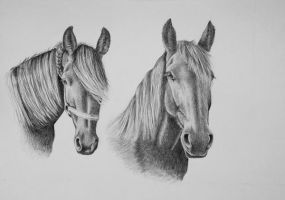 Two friesians by LeontinevanVliet