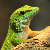 A Gecko With GEICO? 6784P by Sooper-Deviant