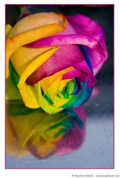 Happy Roses 9 by MarjoleinART-Photos