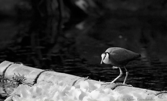 Waterfowl by TND-Photography