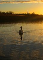 Morning Swim by Photopathica