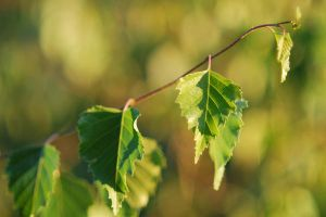 Leaves 01 by 88-Lawstock