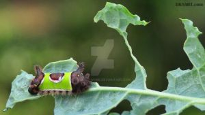 Caterpillar eating kale by dksartwork