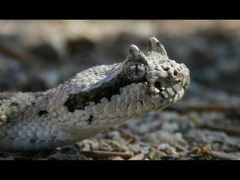 Sidewinder by James-T-Anthony