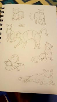 Cats! by imjustamanatee