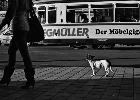 You DOG !! by mm35street