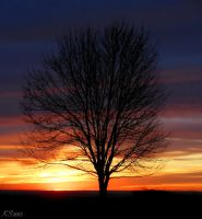 One Tree by K-S-Photography