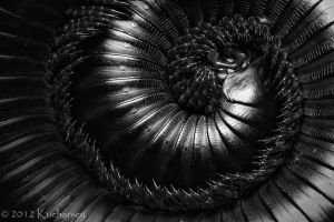 A tribute to H.R. Giger IV by Dark-Raptor