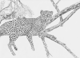 Leopard by Serial-Painter