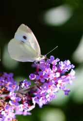 Butterfly in the Afternoon Sun by cobaltsennheiser