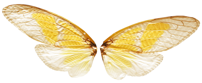 Fairy Wings with Transparence (PNG) by Jantiff-Stocks