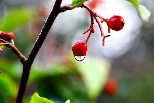 Water drop - Photography by Lyraven