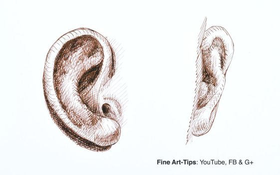 How to Draw an Ear With Pen and Ink - Narrated by ArtistLeonardo