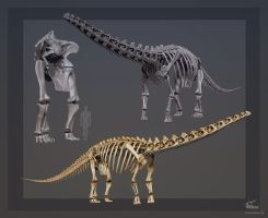 Cooper. Replicating Australia's largest Dinosaur by Swordlord3d
