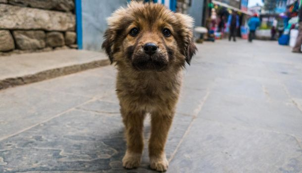 Street puppy in Nepal by ice-grip