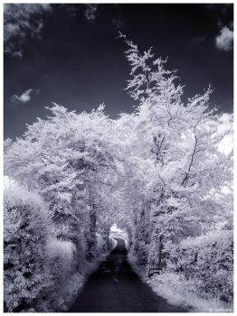 Tree tunnel IR by caithness155