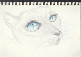 Sketch of siamese cat eye by getupp