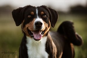 happy dog by awphotoart