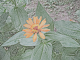 'Colored pencil' flower by ErrantDreams