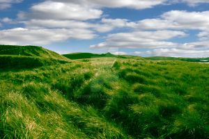 tall green grass on the dunes of Ballybunion golf  by morrbyte