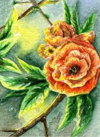 ACEO: Evening Glow by IvoryPeony