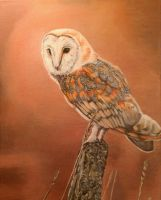 Barn Owl by bunnyrabb567
