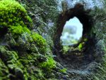Moss-scape IV by Mad-NoX