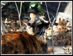 Cat Inspection by surlana