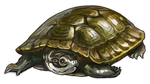 Green Turtle Companion by TokoTime